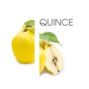 Dodaco - ingredient - quince