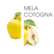 Dodaco - ingrediente - mela cotogna