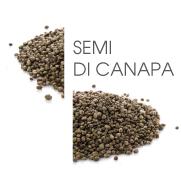 Dodaco - ingrediente - semi di canapa